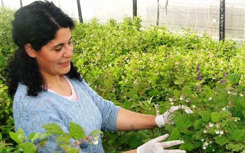 Proyecto que fortalece el emprendimiento en mujeres desarrollará centro CIELO